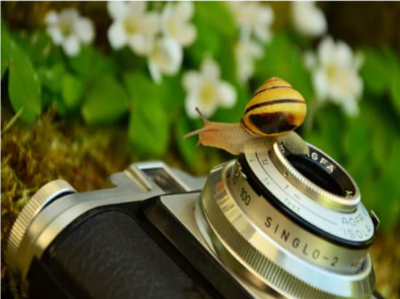 Natuurfotografie workshop